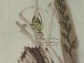 herbarium_i_295x402